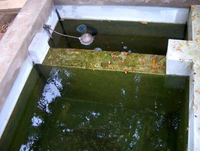 Happy koi happy koi koi keeping done right for Koi pool filtration